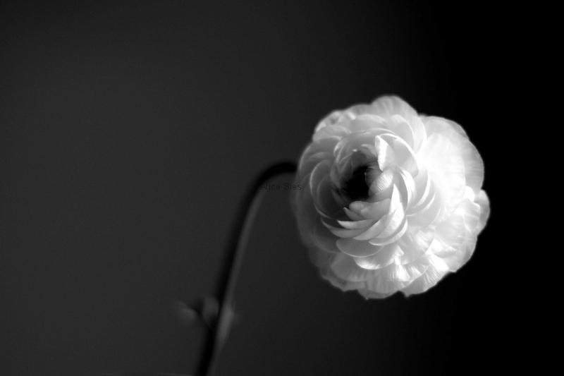 Black & White_09
