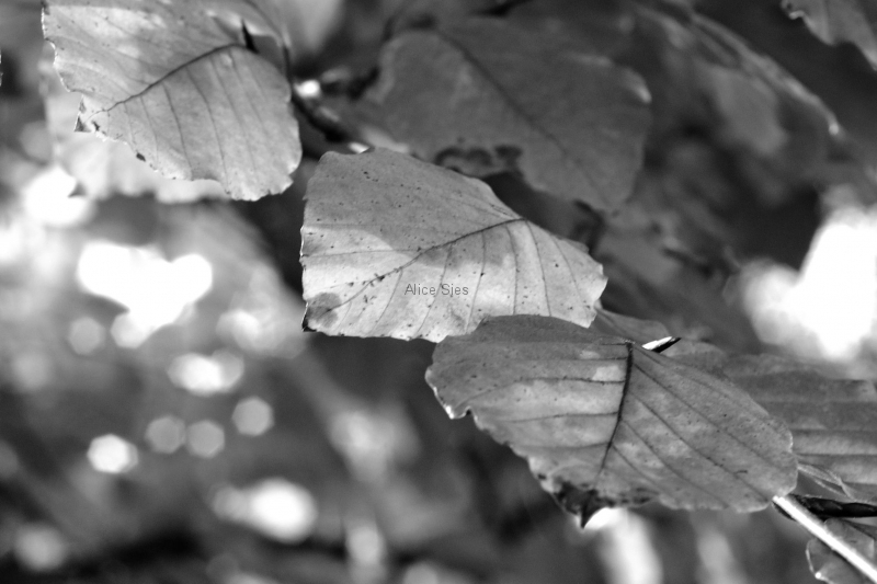 Black & White_06