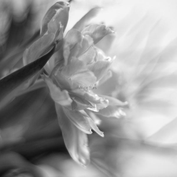 Black & White_04