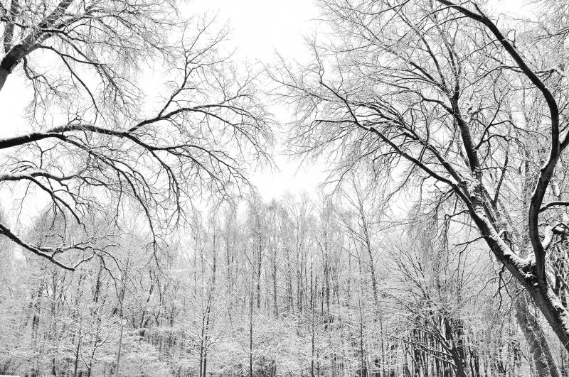 Black & White_03