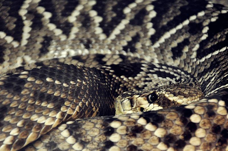 2018-08-16-snake