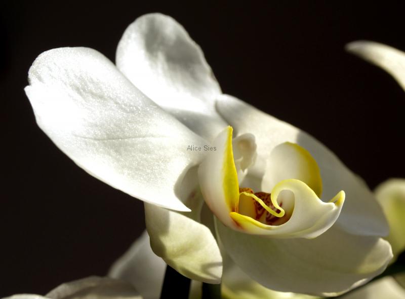 bloemen_01