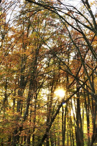 Herfst in Zuiderpark