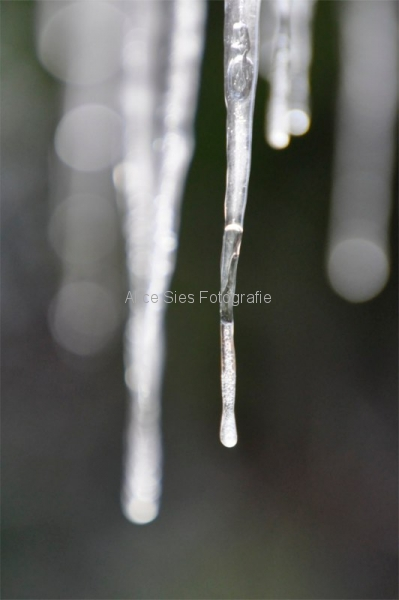 Cold Collection 2010