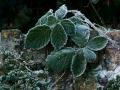 2009-01-09-14-47-09_01-sneeuw-ijs-jpg