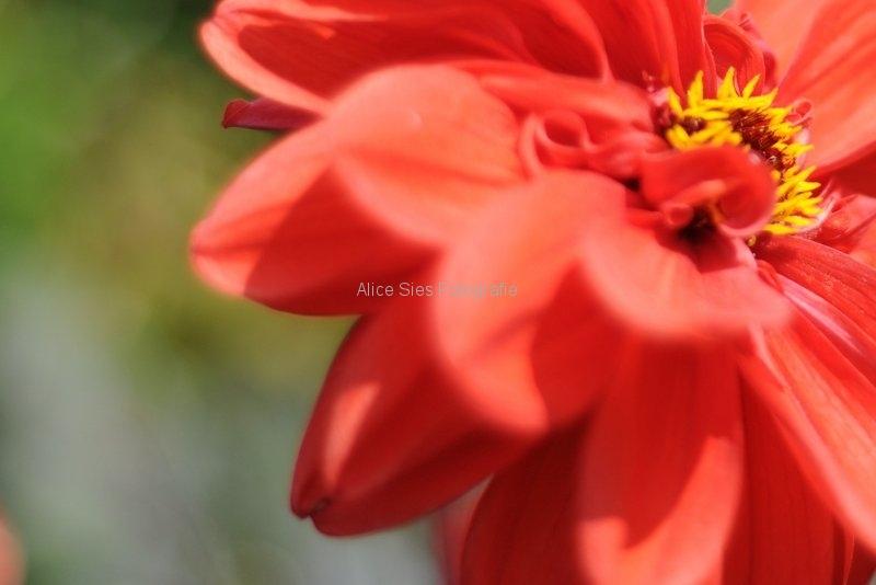 01-010-bloem-shop
