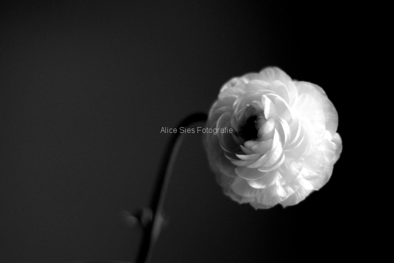 2012-10-11-12-18-01-witte-bloem