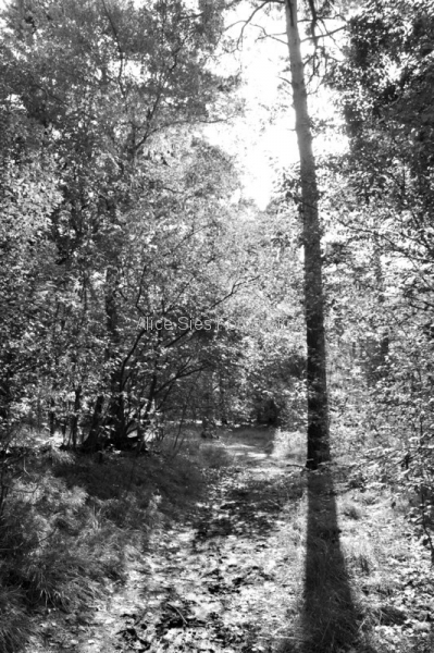 2010-09-18-15-45-23-lage-vuursche-jpg