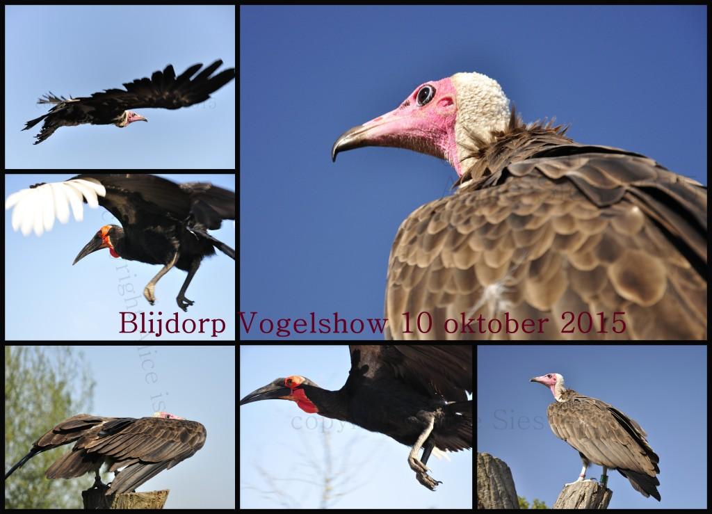 Blijdorp vogelshow